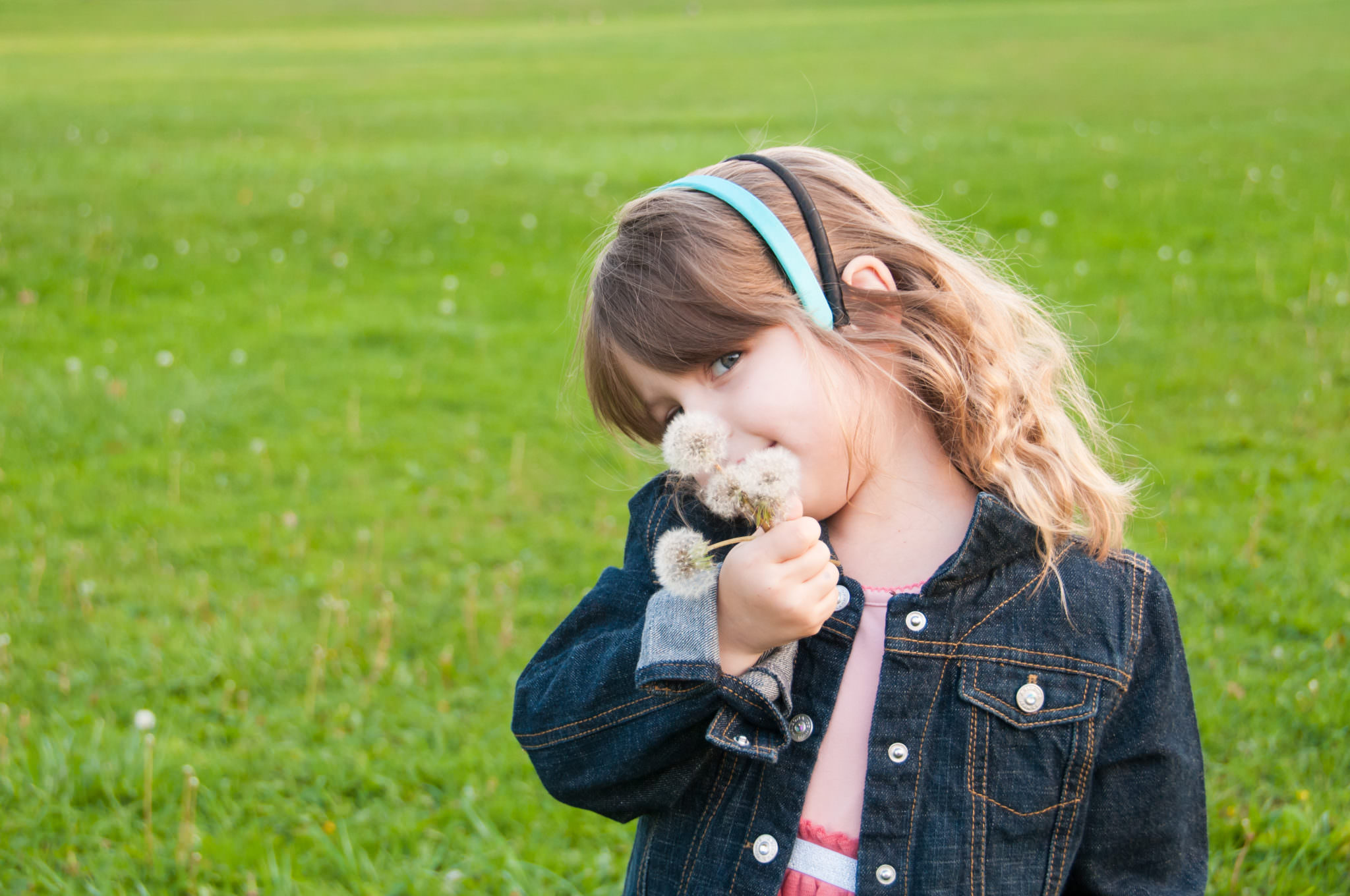 Young girl with dandelions, Northville Child Photographer