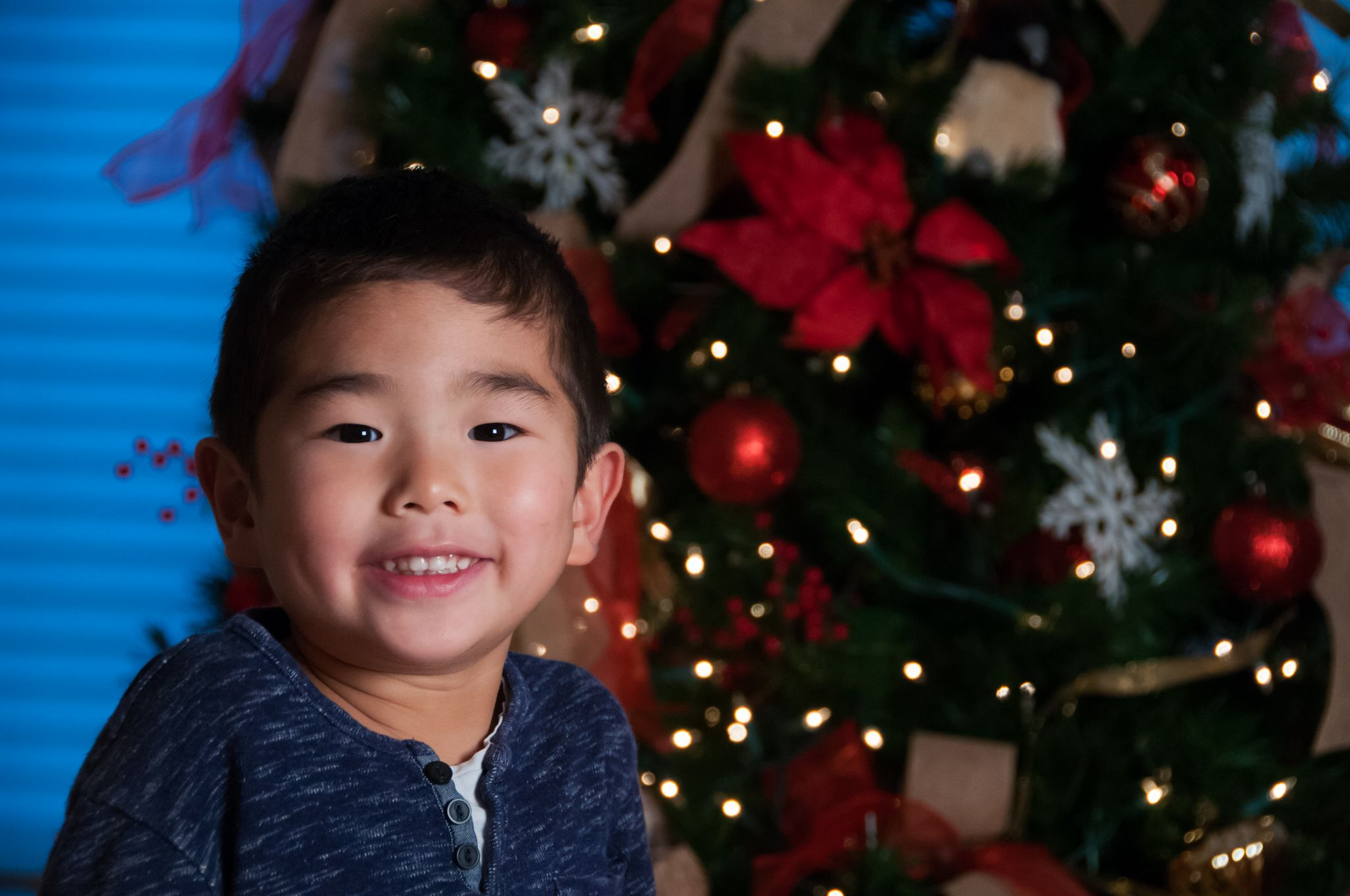 young boy in blue by a Christmas tree, Northville Holiday Photographer